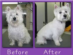 Dog Grooming Reviews In Orange County